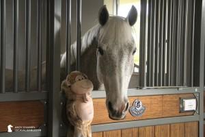 Cédric, le cheval de Laura Kraut