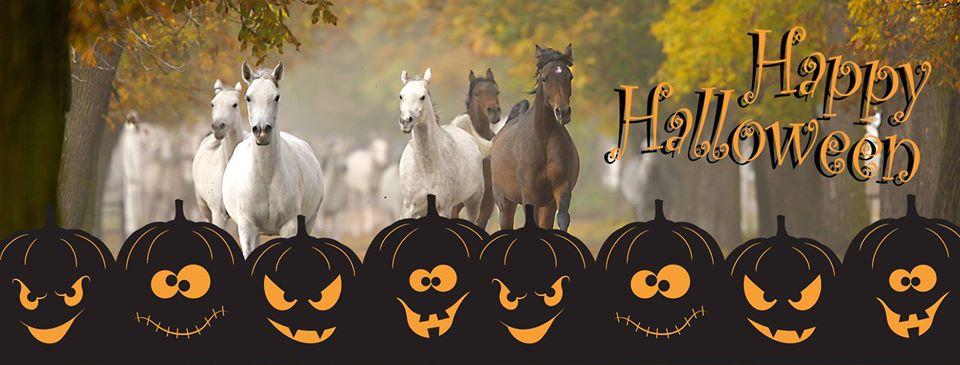 Halloween avec Kingsland - Le cavalier bleu