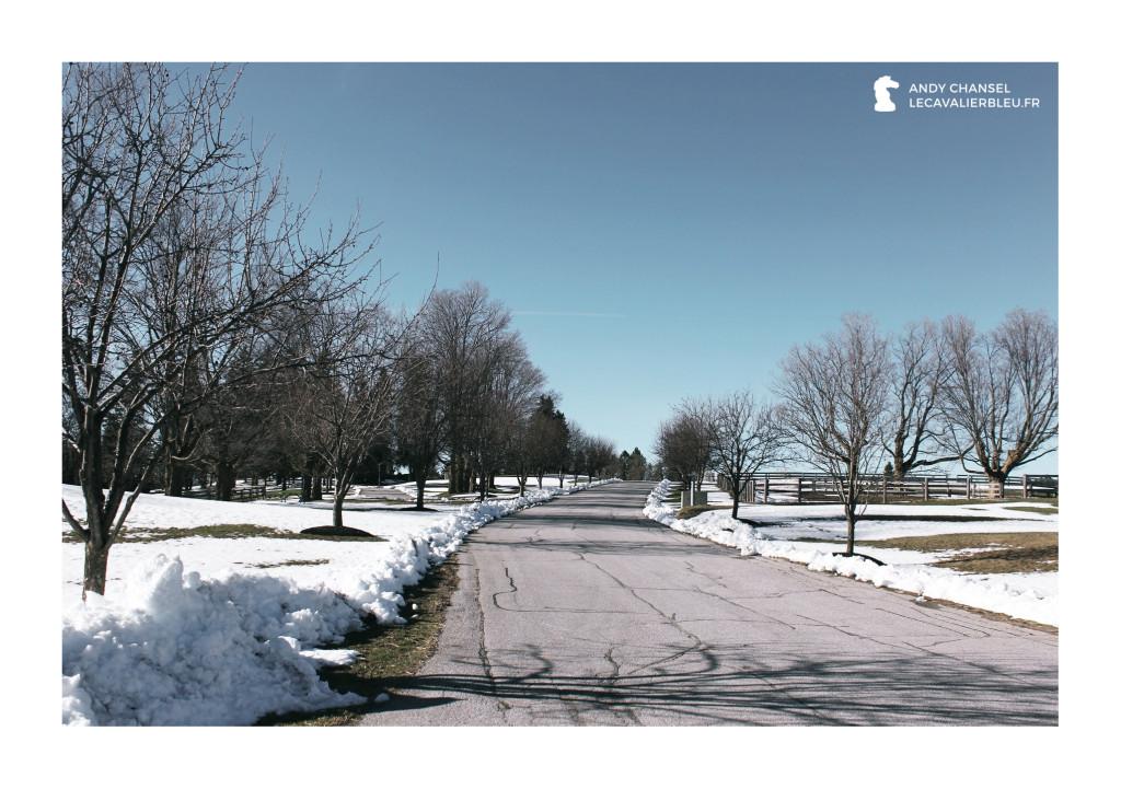 Le Cavalier Bleu - Wayward Farm
